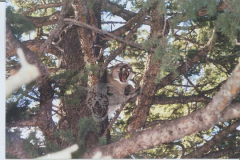 Mountain Lion Sightings