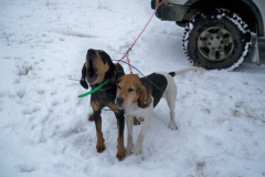Our Hounds and Other Hunts